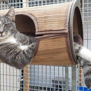 Kattenpension Silvestris image 1