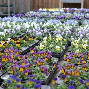 vof Tuincentrum Schoutenbos image 2