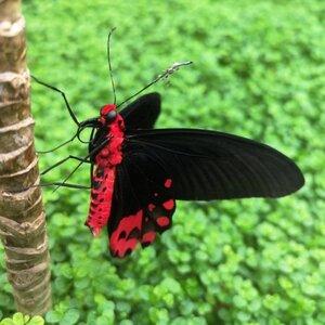 Vlindertuin Vlindorado image 1