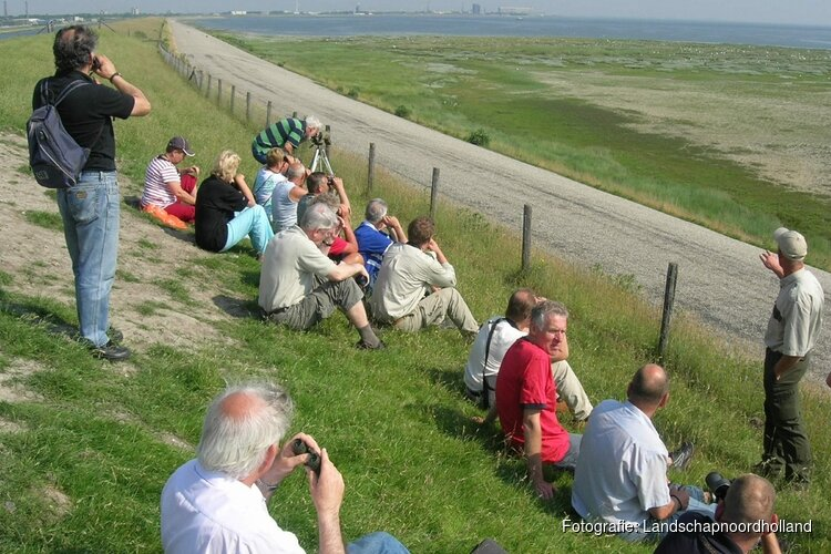 Vogelexcursie tijdens broedtijd op Balgzand