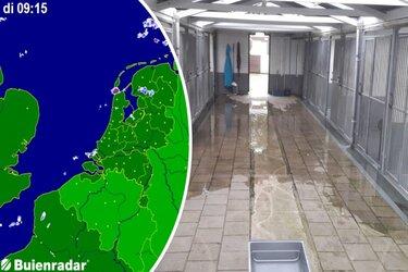 Dierentehuis Den Helder onder water door zeer lokale wolkbreuk
