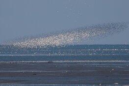 Zonsopkomst op vogelrijk Balgzand