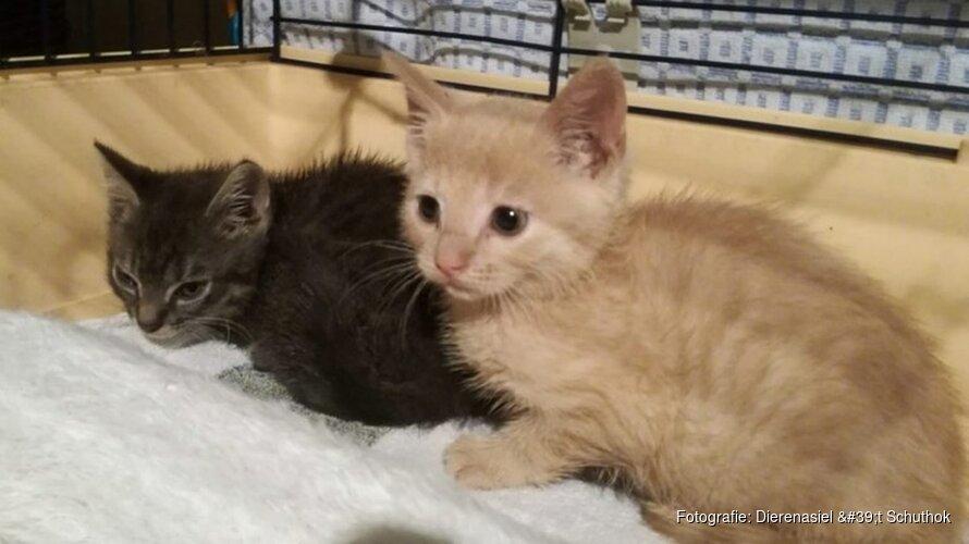"""Aanstroom kittens Helders dierenasiel houdt niet op: """"Alstublieft, laat uw kat helpen"""""""