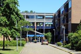Uitbraak van iepziekte in Den Helder