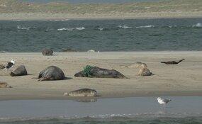 Zeehond verlost van net