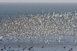 Vogels kijken op Balgzand