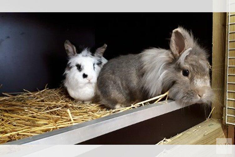 Wie is de eigenaar van deze konijnen?